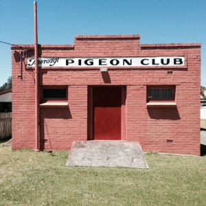 Lucas was thrilled to discover the Towradgi Pigeon Club