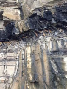 Coal, shale, mud