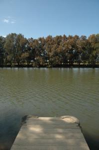 V.Bicego_WOTI_18.09.15_Mullet Creek_6599