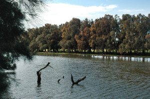 V.Bicego_WOTI_18.09.15_Mullet Creek_6609
